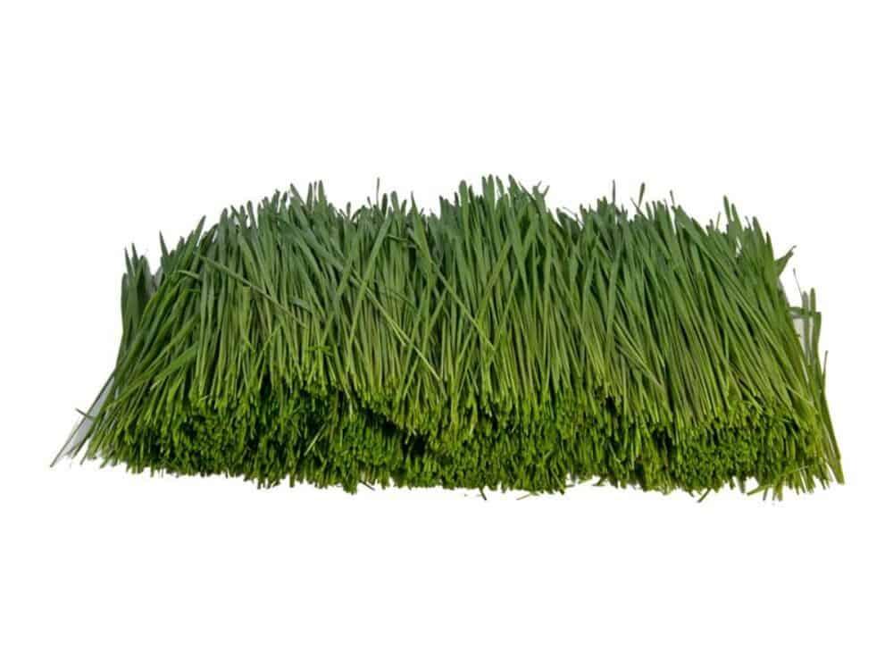Bio Weizengras geschnitten