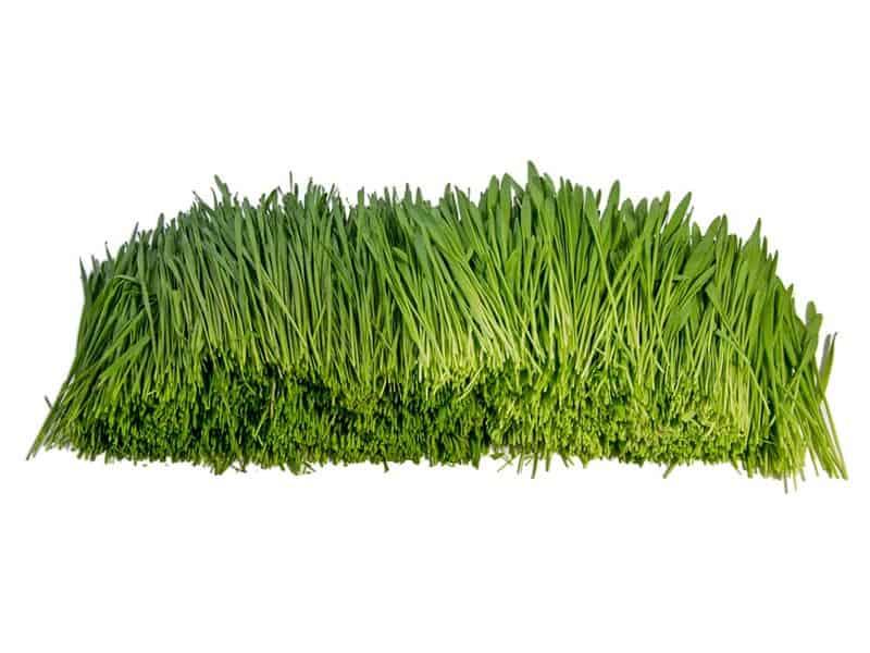 Bio Gras Mix frisch geschnitten