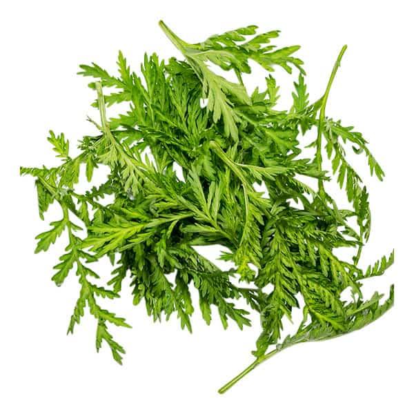 Zutaten-Artemisia-annua